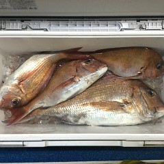5月 23日(日)午前・アジ釣り 午後・ウタセ真鯛の写真その11