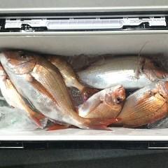 5月 23日(日)午前・アジ釣り 午後・ウタセ真鯛の写真その12