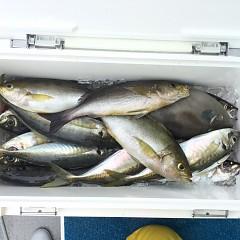 5月24日(月)午前便・アジ・イサキ釣りの写真その1
