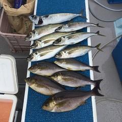 5月 26日(水) 午前便・アジ・イサキ釣りの写真その2