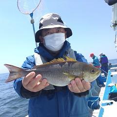 5月 31日(月)午前・午後便・アジ、イサキ釣りの写真その1