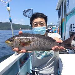 5月 31日(月)午前・午後便・アジ、イサキ釣りの写真その2