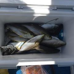 5月 31日(月)午前・午後便・アジ、イサキ釣りの写真その6