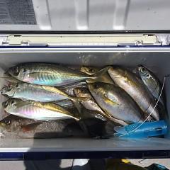 5月 31日(月)午前・午後便・アジ、イサキ釣りの写真その7