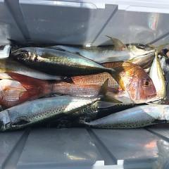 6月 9日(水)午前便・イサキ、アジ釣りの写真その4