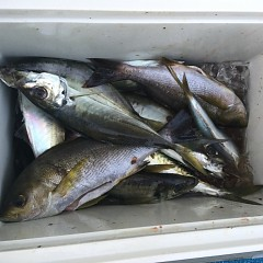 6月 10日(木) 午前、午後・アジ、イサキ釣りの写真その9