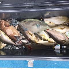 6月 18日(金)午前便・イサキ釣りの写真その7