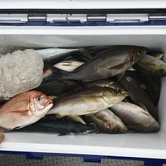 6月 18日(金)午後便・イサキ釣りの写真その3