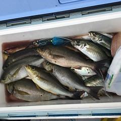 6月 18日(金)午後便・イサキ釣りの写真その4