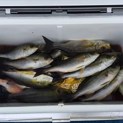 6月 26日(土)午前、午後・イサキ釣りの写真その7