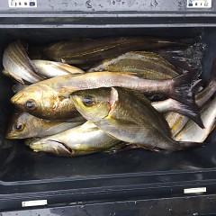 6月 26日(土)午前、午後・イサキ釣りの写真その8