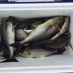 6月 26日(土)午前、午後・イサキ釣りの写真その9