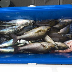 6月 26日(土)午前、午後・イサキ釣りの写真その11