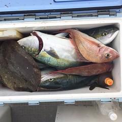 6月28日(月)午後便・タテ釣りの写真その3