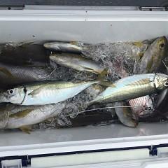 6月30日(水)午前・イサキ釣りの写真その3