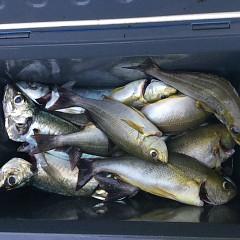6月30日(水)午前・イサキ釣りの写真その4