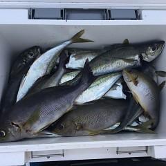 6月30日(水)午前・イサキ釣りの写真その5