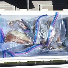 7月 22日(木)1日便・スルメイカ釣りの写真その6