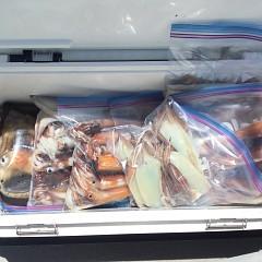7月 23日(金)1日便・スルメイカ釣りの写真その8