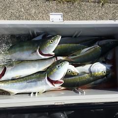 7月29日(木)タテ釣りの写真その5