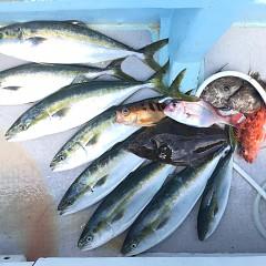 7月 30日(金)午前便・タテ釣りの写真その6