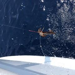 7月31日(土)1日便・スルメイカ釣りの写真その7