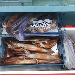 8月 13日(金)1日便・スルメイカ釣りの写真その1