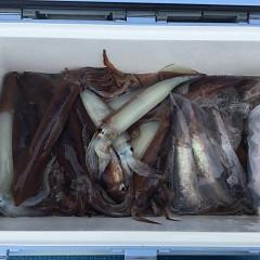 8月 13日(金)1日便・スルメイカ釣りの写真その2