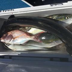 8月 28日(土)午前、午後・タテ釣りの写真その5