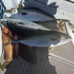 8月 28日(土)午前、午後・タテ釣りの写真その9