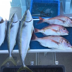 8月 29日(日)午前便・タテ釣りの写真その3