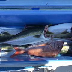 8月 30日(月) 午前便・タテ釣りの写真その2