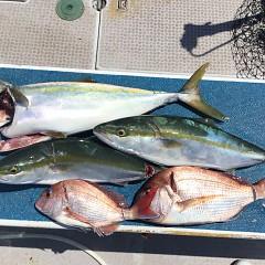 8月 30日(月) 午前便・タテ釣りの写真その3