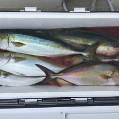9月 5日(日)午前便・タテ釣りの写真その10
