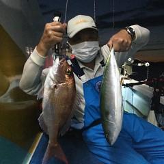 9月 9日(木)午後便・ウタセ真鯛の写真その4
