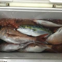9月 9日(木)午後便・ウタセ真鯛の写真その8