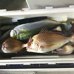9月 9日(木)午後便・ウタセ真鯛の写真その10