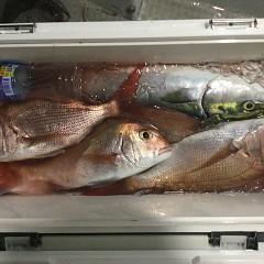 9月 9日(木)午後便・ウタセ真鯛の写真その11