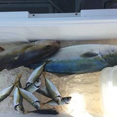 9月 10日(金)午前便・タテ釣りの写真その6