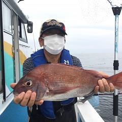 9月 13日(月) 午後便・ウタセ真鯛の写真その1