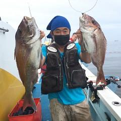 9月 13日(月) 午後便・ウタセ真鯛の写真その2