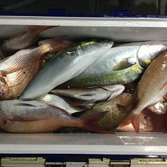 9月 14日(火)午後便・ウタセ真鯛の写真その6