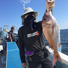 9月 24日(金) 午後便・ウタセ真鯛の写真その2