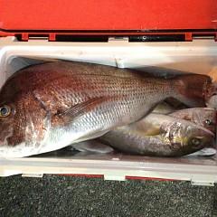 9月 24日(金) 午後便・ウタセ真鯛の写真その8
