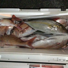 9月 24日(金) 午後便・ウタセ真鯛の写真その9
