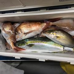 9月 24日(金) 午後便・ウタセ真鯛の写真その11