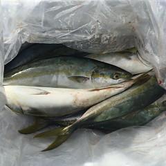9月 24日(金)午前便・タテ釣りの写真その3