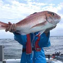 9月 25日(土) 午後便・ウタセ真鯛の写真その3