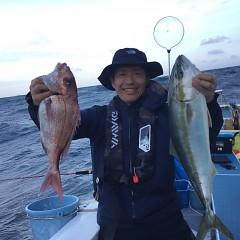 9月 25日(土) 午後便・ウタセ真鯛の写真その4