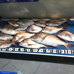 9月 25日(土) 午後便・ウタセ真鯛の写真その8